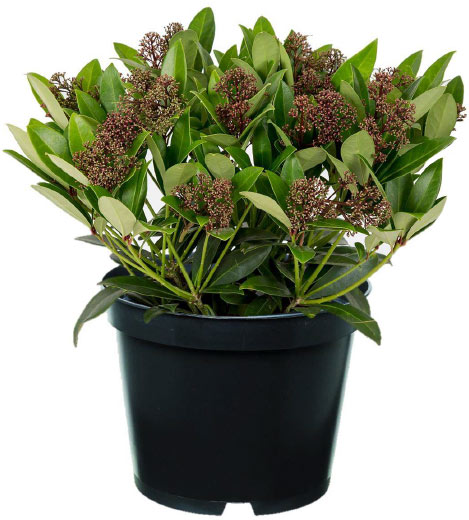 hardy-plant